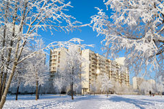 Snow-covered trees in the city of Moscow, Russia Royalty Free Stock Image