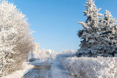 Snow-covered trees in the city of Moscow, Russia Stock Photos