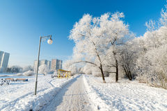 Snow-covered trees in the city of Moscow, Russia Stock Photo