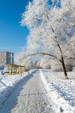 Snow-covered trees in the city of Moscow, Russia Royalty Free Stock Images