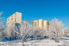 Snow-covered trees in city of Moscow, Russia Stock Images