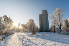 Snow-covered trees in the city of Moscow, Russia Stock Images