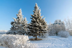 Snow-covered trees in the city of   Moscow, Russia Royalty Free Stock Photography