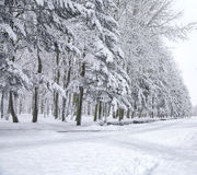 Snow-covered trees in the city park Royalty Free Stock Photography