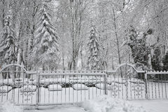 Snow-covered trees in the city park Stock Photography