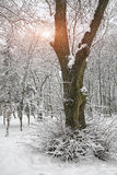 Snow-covered trees in the city park Royalty Free Stock Photos