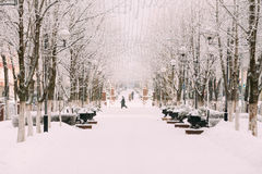 Snow-covered trees on city street. Snowy winter Stock Photography