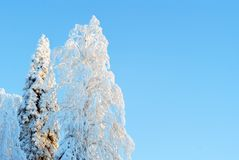 Snow covered trees on a clear frosty day stock photos