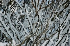Snow covered trees. A close-up of snow-covered trees. A blue sky is just visible through the branches Royalty Free Stock Photography
