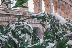 Snow-Covered Trees at the Coliseum. Melting in the hot Roman sun Royalty Free Stock Photography