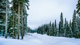 Snow Covered Trees and deep snow pack in the High Alpine Stock Images