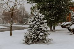 Snow covered trees and falling snow. Snow winter snow falling Royalty Free Stock Photography