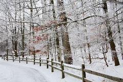Winter Fence And Forest Stock Photo