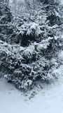 Snow covered trees in the fir forest stock images