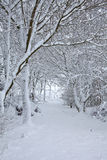 Snow covered trees in forest Royalty Free Stock Photography