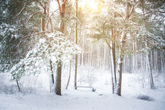 Snow covered trees in forest Royalty Free Stock Photos