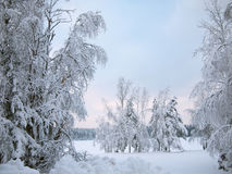 Snow-covered trees in the frosty day in frozen mist on the shore of forest lake covered with ice Stock Photography