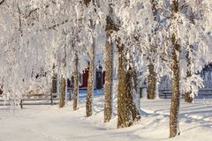 Snow covered trees at  a garden Stock Images