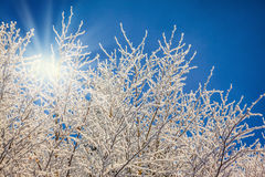 Snow-covered trees glisten in sunny Christmas morning Stock Image