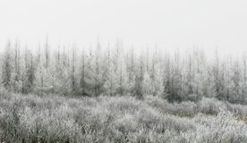 Snow covered Trees and Grasses Royalty Free Stock Images