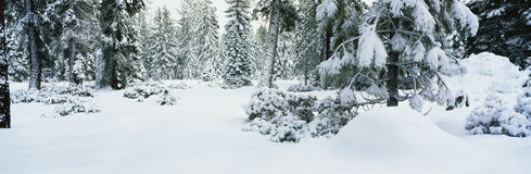 Snow covered trees and ground Stock Photos