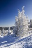 Snow covered trees Stock Photos