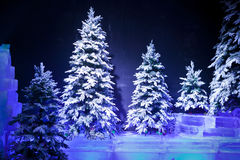 Snow covered trees Stock Images
