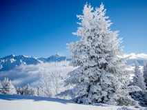 Free Snow Covered Trees In The Alps - 1 Royalty Free Stock Images - 83836109