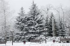 Free Snow-covered Trees In The City Royalty Free Stock Photography - 104158677