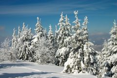 Snow Covered Trees In Winter Carpathian Stock Photography