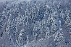 Snow covered trees on the Italian Dolomites Royalty Free Stock Photography