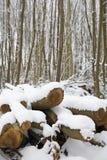 Snow covered trees. Kent England. Stock Photos