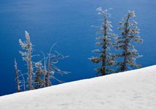 Snow covered trees by lake Royalty Free Stock Photo