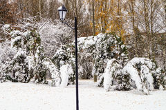 Snow-covered trees lantern. Lantern snow-covered trees in the park Royalty Free Stock Photography
