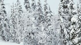 Snow covered trees in Lapland stock footage