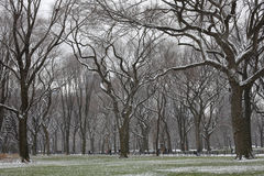 Snow covered trees and lawn in Central Park Stock Photography
