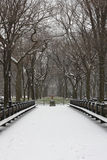 Snow covered trees and lawn in Central Park. Snow covered trees and benches along the Mall in Central Park, New York City Stock Photos