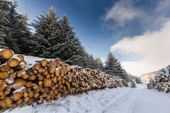 Snow covered trees and logs. Snow covered logs and trees in a winter landscape royalty free stock photography