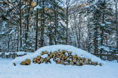 Snow covered trees and logs Royalty Free Stock Image