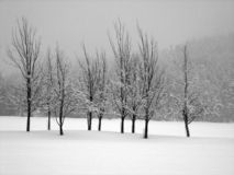 Snow covered trees in a midst of a blizzard. Horizontal Royalty Free Stock Image