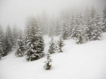 Snow covered trees in mist Royalty Free Stock Photos