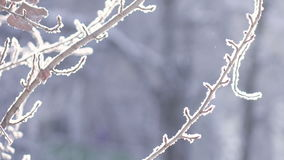 Snow covered trees. In morning sun snow covered tree branches stock video footage