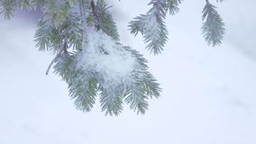 Snow covered trees stock footage