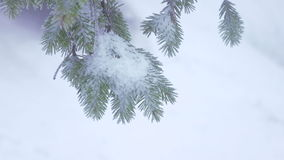 Snow covered trees. In morning sun snow covered tree branches stock video