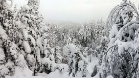 Snow covered trees on mountain peak, winter landscape stock photos