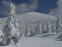Snow-covered trees on mountain slope stock photography