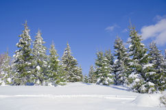 Snow covered trees on mountain Stock Image
