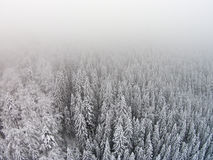 Snow-covered trees in a mountainous area during a fog.  Royalty Free Stock Photography