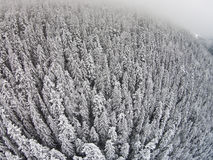 Snow-covered trees in a mountainous area during a fog.  Royalty Free Stock Photo