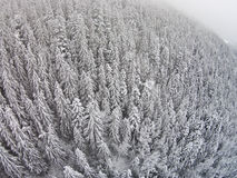 Snow-covered trees in a mountainous area during a fog.  Royalty Free Stock Image